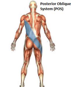 Τι είναι το Posterior Oblique Subsystem (POS)